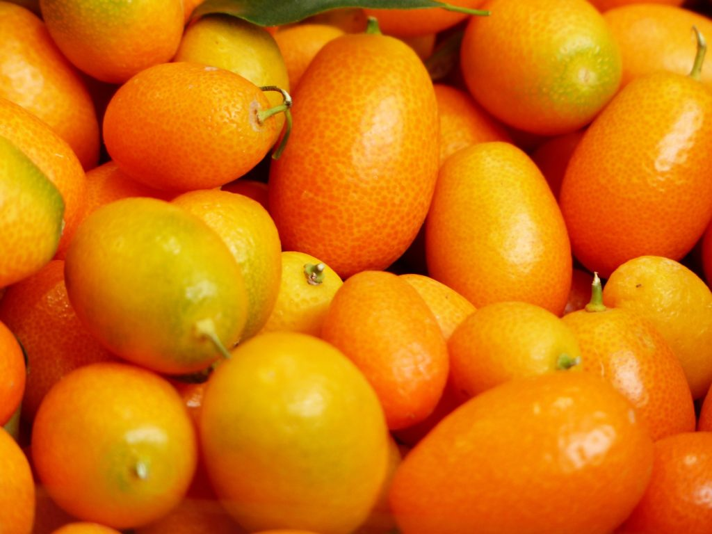 Kumquat Mead Recipe D.I.Y.