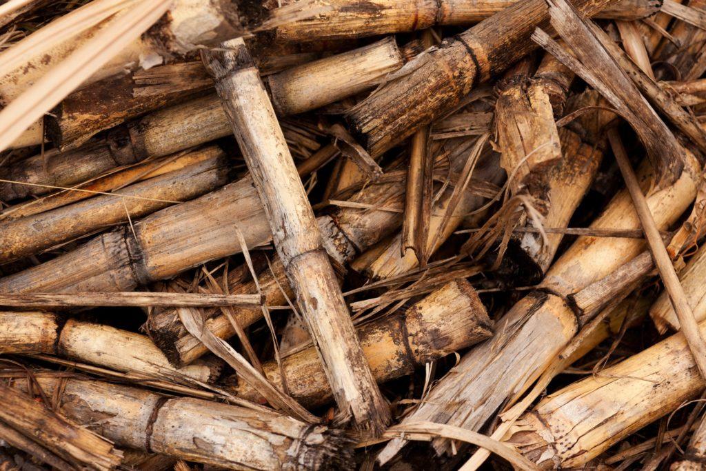 Sugarcane Infused Rum Recipe D.I.Y.